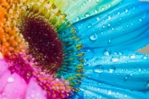 Wa11papers.ru_flowers_1680x1050_021