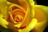 Wa11papers.ru_flowers_1680x1050_043