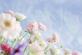 Wa11papers.ru_flowers_1680x1192_023