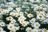 Wa11papers.ru_flowers_1680x1192_059