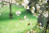 Wa11papers.ru_flowers_1900x1348_058