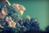 Wa11papers.ru_flowers_1920x1080_060