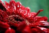 Wa11papers.ru_flowers_1920x1080_061