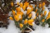 Wa11papers.ru_flowers_1920x1080_086
