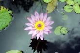 Wa11papers.ru_flowers_1920x1200_005