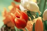 Wa11papers.ru_flowers_1920x1200_026