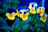 Wa11papers.ru_flowers_1920x1200_029