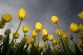 Wa11papers.ru_flowers_1920x1200_033