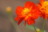 Wa11papers.ru_flowers_1920x1200_045