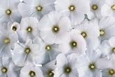 Wa11papers.ru_flowers_1920x1200_048