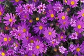 Wa11papers.ru_flowers_1920x1200_050