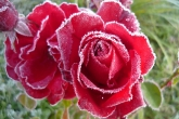 Wa11papers.ru_flowers_1920x1200_054