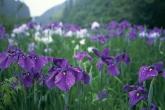 Wa11papers.ru_flowers_1920x1200_062