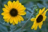 Wa11papers.ru_flowers_1920x1200_063