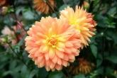 Wa11papers.ru_flowers_1920x1200_066