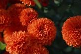 Wa11papers.ru_flowers_1920x1200_069