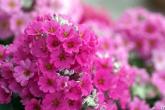 Wa11papers.ru_flowers_1920x1200_070