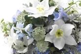Wa11papers.ru_flowers_1920x1200_071