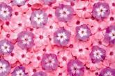 Wa11papers.ru_flowers_1920x1200_072