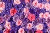 Wa11papers.ru_flowers_1920x1200_073