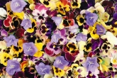 Wa11papers.ru_flowers_1920x1200_074