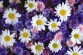 Wa11papers.ru_flowers_1920x1200_076