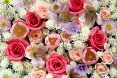 Wa11papers.ru_flowers_1920x1200_077