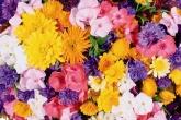 Wa11papers.ru_flowers_1920x1200_078