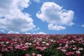 Wa11papers.ru_flowers_1920x1200_079