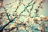 Wa11papers.ru_flowers_1920x1200_088