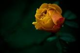 Wa11papers.ru_flowers_1920x1200_091