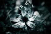 Wa11papers.ru_flowers_1920x1200_093