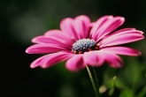 Wa11papers.ru_flowers_1920x1200_100