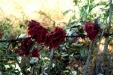 Wa11papers.ru_flowers_1920x1200_101