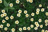 Wa11papers.ru_flowers_1920x1200_102