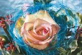 Wa11papers.ru_flowers_1920x1200_103