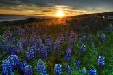 Wa11papers.ru_flowers_1920x1440_000