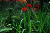 Wa11papers.ru_flowers_2048x1371_092