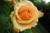 Wa11papers.ru_flowers_2048x1536_055