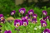 Wa11papers.ru_flowers_2144x1424_036