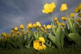 Wa11papers.ru_flowers_2560x1600_003