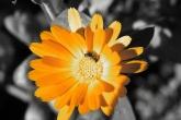 Wa11papers.ru_flowers_2560x1600_011