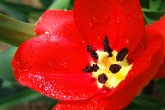 Wa11papers.ru_flowers_2560x1600_012