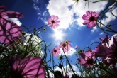 Wa11papers.ru_flowers_2560x1600_013