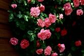 Wa11papers.ru_flowers_2560x1600_017