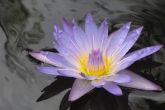 Wa11papers.ru_flowers_2560x1600_034