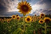 Wa11papers.ru_flowers_2560x1600_035