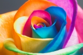 Wa11papers.ru_flowers_2560x1600_057
