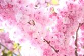 Wa11papers.ru_flowers_2560x1600_096