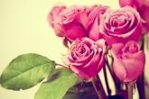 Wa11papers.ru_flowers_2560x1600_097